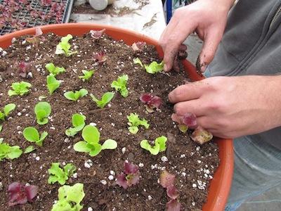 salad bowl class