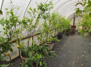 citrus greenhouse